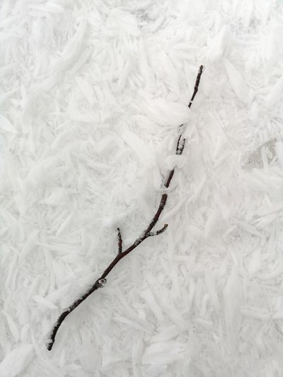 Frozen Winter Wintertime Winter Trees White Backgrounds Branch Frozen Nature Frozen Frosty Mornings Extreme Weather Cold Temperature Cold Weather Weather Cold Day Huaweiphotography Mobile Photography Huaweip20pro Light Copy Space Nopeople Mobilephotography PhonePhotography Beautiful Stockphoto Stockimage Winter_collection EyeEm Nature Lover EyeEm Gallery Snow Winter