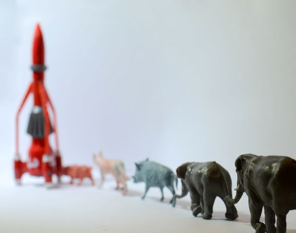 Animal Animal Themes Animals Ark Close-up Day Ecology End Of The World Flee Focus On Foreground Herbivorous Leaving Livestock Mammal Nature No People Noa Noah Noedit Outdoors Rocket Selective Focus Sky Toys Lieblingsteil Adapted To The City