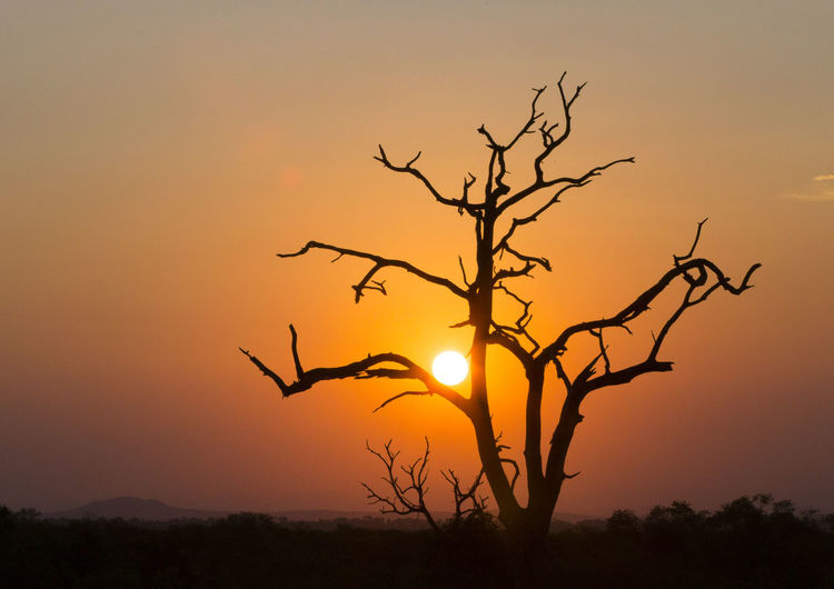 Bare Tree Beauty In Nature Branch Day Dead Tree Landscape Lone Nature No People Orange Color Outdoors Scenics Silhouette Sky Sun Sunset Tranquil Scene Tranquility Tree