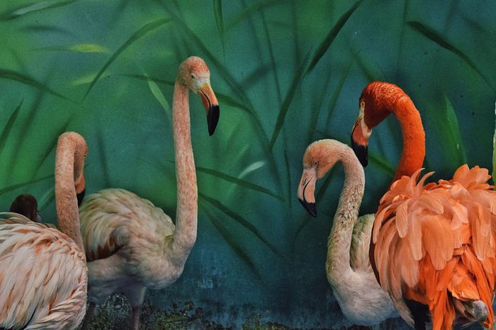 Flamingo series Bird Nature Animal Themes No People Beauty In Nature Flamingo Day Close-up Flamingo Flamingos Flamingo At The Zoo Birds Bird Photography Birds_collection Animal Photography Zoo Exploring Style
