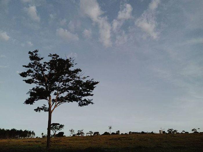 Quero respirar o ar de um novo lar.. E avistar outras colinas.. Que conspirariam contra o que já vi das paisagens conhecidas.. ↞ Livefolk Folk Tree Folkbrasil Vscofolk Photograph VSCO Vscocam VscoBr Vscogrambr Vscogram Vscovintage Vscogrid Mobilemag Brasilfolk Relicariofotografico _minhafoto Explore Liveauthentic Landscape Wanderlust Vscocabine