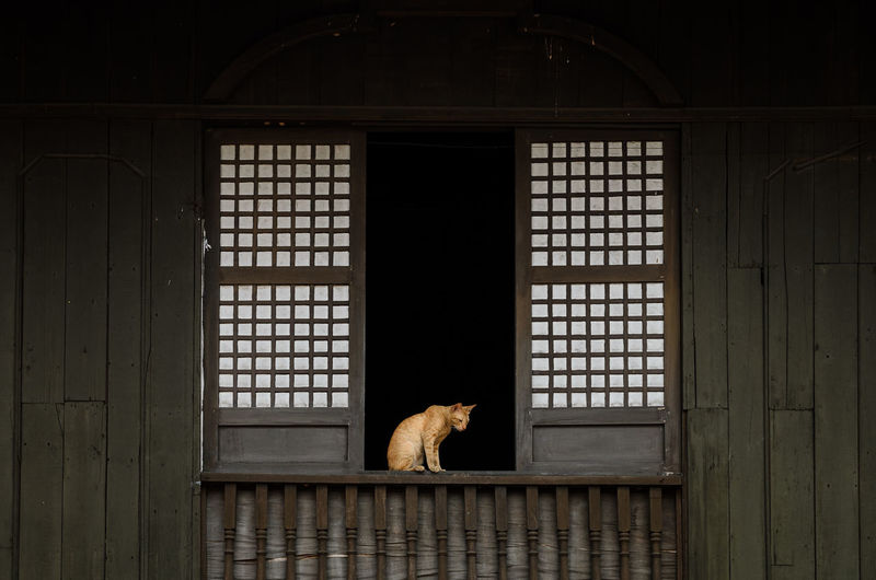 Waiting Game Architecture Cat EyeEm EyeemPhilippines Frame Minimalism Pattern Pets Simplicity Window Window Frame