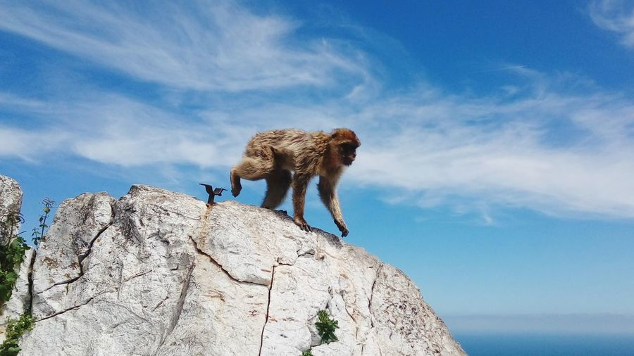 Low angle view of animal on rock against sky