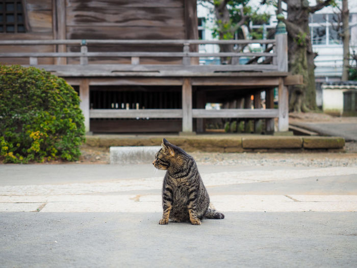 Animal Animal Portrait Cat Feline Mammal One Animal Stray Cat Temple お寺 ねこ 動物 猫 野良猫