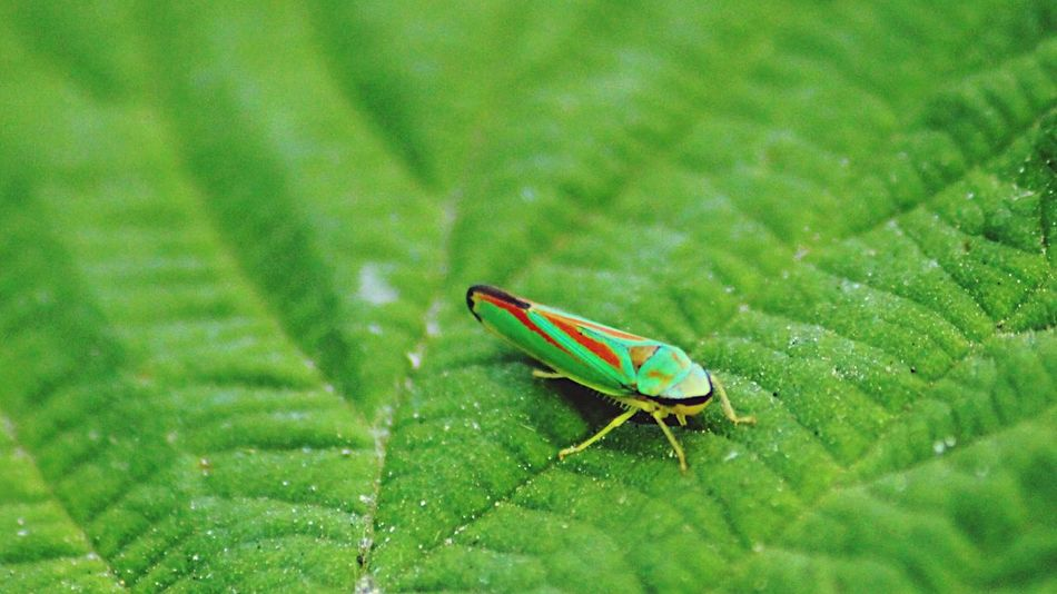 Green Color Leaf Animal Themes Insect One Animal Animals In The Wild Close-up Nature No People Day Damselfly Outdoors Animal Wildlife Grass Beetle Victoria Bc Victoria CRD Yyj