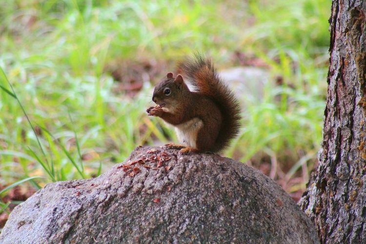 Tree Tail Child