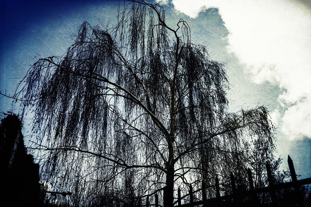tree, low angle view, sky, day, no people, nature, outdoors, beauty in nature, branch, bare tree, architecture, dead tree