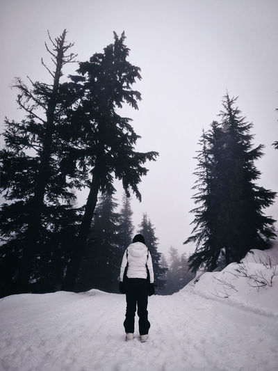 Snow forest with a person in the center
