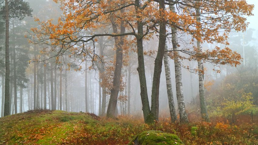 Weather Tree Plant Beauty In Nature Fog Forest Autumn Land Wheather