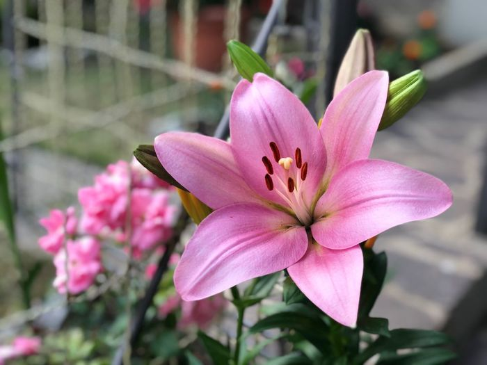 La bellezza della natura Like Flowering Plant Flower Fragility Vulnerability  Plant Freshness Petal Pink Color Beauty In Nature Nature No People The Great Outdoors - 2018 EyeEm Awards