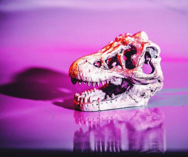Project Skull Maldives Skull