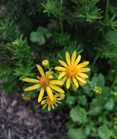 Flower Yellow Growth Nature Plant Petal Blooming Fragility Flower Head Freshness Beauty In Nature No People Outdoors Close-up Day