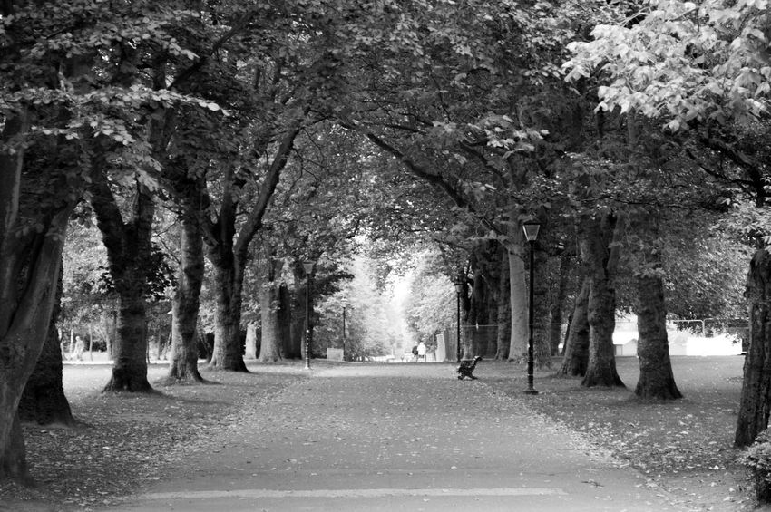 Tranquillity Trees Park Nature Leafy Black & White