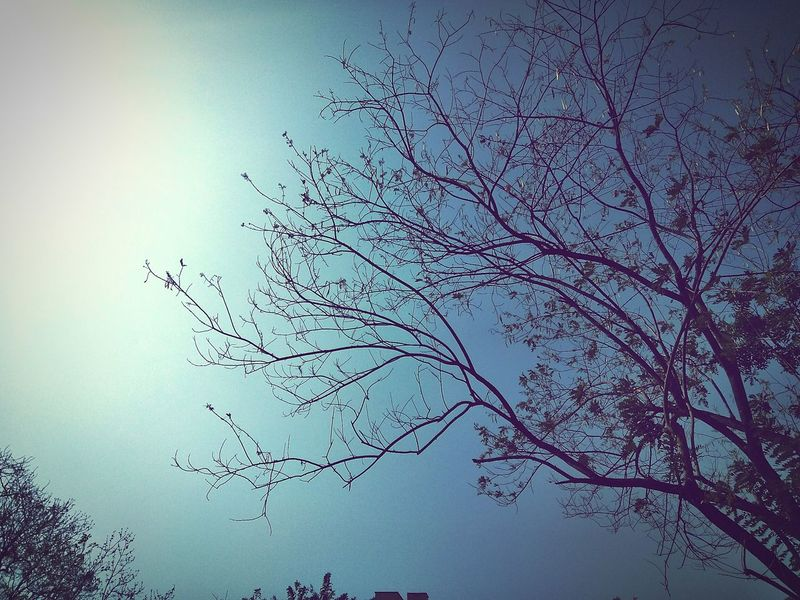 When you walk down the streets alone...They are the one who accompany you-Trees🍁Nature No People Sky Beauty In Nature Outdoors Tree Day Trees Trees Of Eyeem Trees And Clouds Trees Are Beautiful Treeswithoutleaves Trees Collection