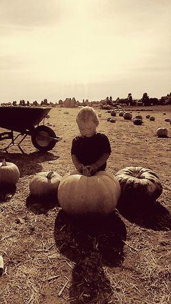 PumpkinPatch🎃 Halloween EyeEm Halloween2015 Pumpkinpicking Happy Halloween Pumpkin