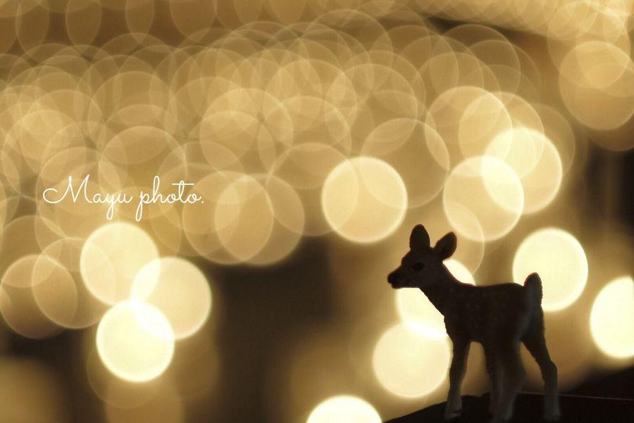Oldlens Candlenight Candle Japan Pancolar CarlZeiss Osaka,Japan 大阪 キャンドルナイト 1000000人のキャンドルナイト 西梅田 オールドレンズ 玉ボケ 2016.12.07
