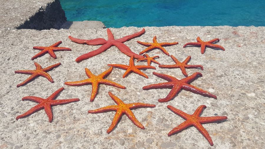 Sea Life Sea Water Beach Starfish  Star Shape Close-up