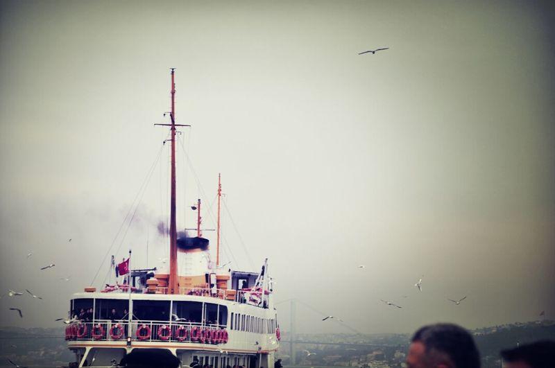 Istanbul - Bosphorus Nature