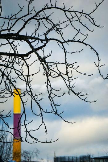 Tree Bird Bare