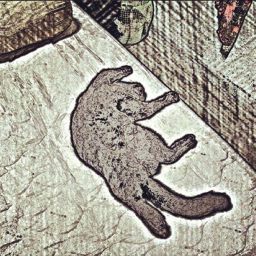 Buruk nye tido dlm bilik yg ada aircon...kat atas katil aku pulak tu Mcmbigboss 2ndqueeninthe houseBsh Mommymontz ♥