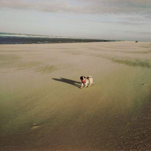Zeeland  Beach Pug EyeEm Best Shots