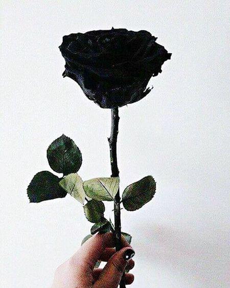Negro Rosa
