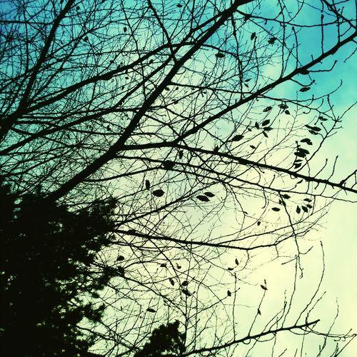 冬の空を見上げた。夏の青さとは違った透き通った空気に枯れ葉のパッチワークが。 Sky Trees Tree And Sky Early Winter Fine Weather