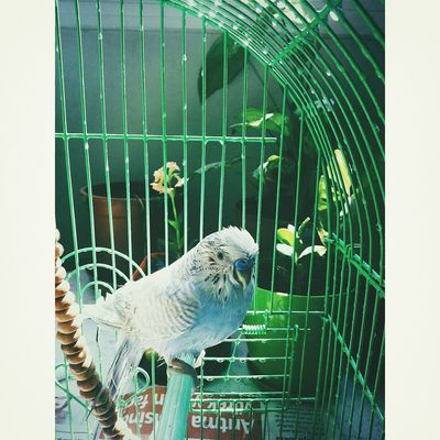 Animal Love VSCO Vscocam Bird