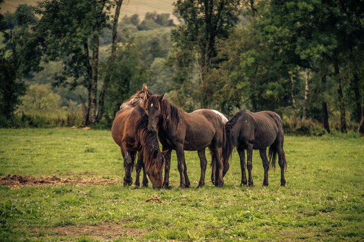 Animal Themes Animals In The Wild Beauty In Nature Day Domestic Animals Forest Full Length Grass Green Color Horses Landscape Mammal Nature No People Outdoors Tree