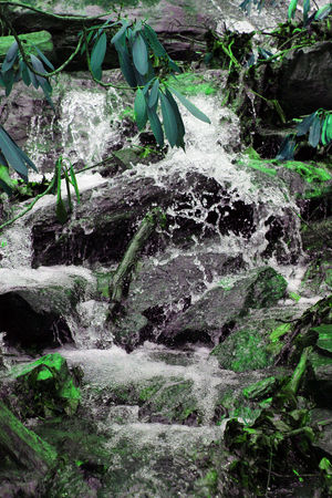 Beauty In Nature Close-up Day Freshness Green Color Growth Leaf Motion Nature No People Outdoor Photography Outdoors Plant Rock - Object Water Waterfall