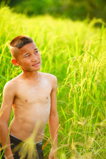 Rice Rice Field Rice Paddy Plant Look Tink Child Childhood Portrait Boys Summer Shirtless Muscular Build Happiness Field Males