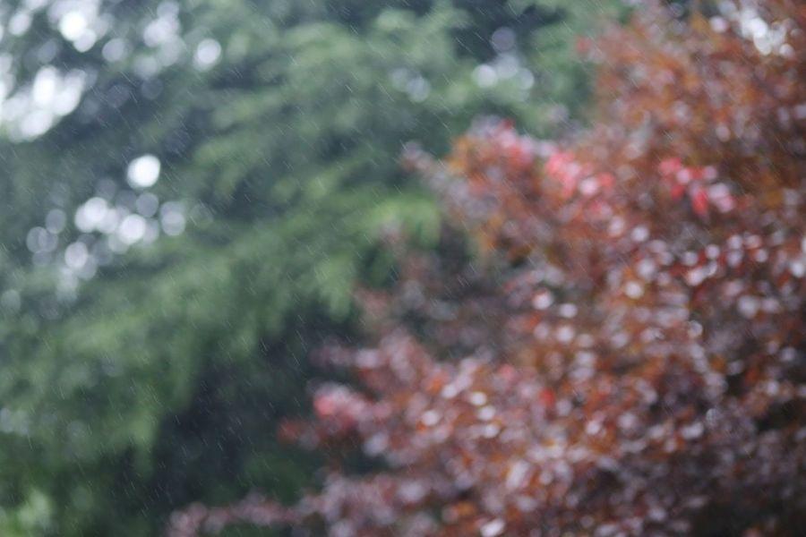 EyeEm Nature Lover Drizzle Drizzling Rainy Days Raindrops In The Park At The Park Rainy Day Raining Rain Drops