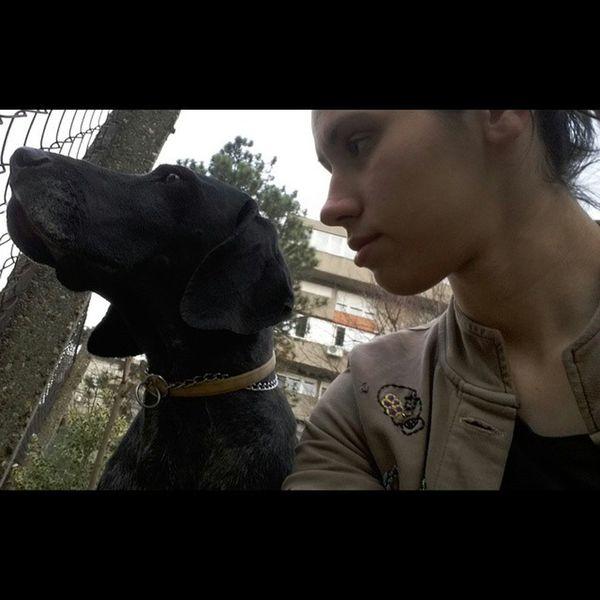 Instagram Deutch Kurzhaar German shorthaired bird dog braccotedesco bracchi bracoaleman cuiccoli instadog instapet petstagram petsofinstagram dogworld dogstagram dogsofinstagram instalove march