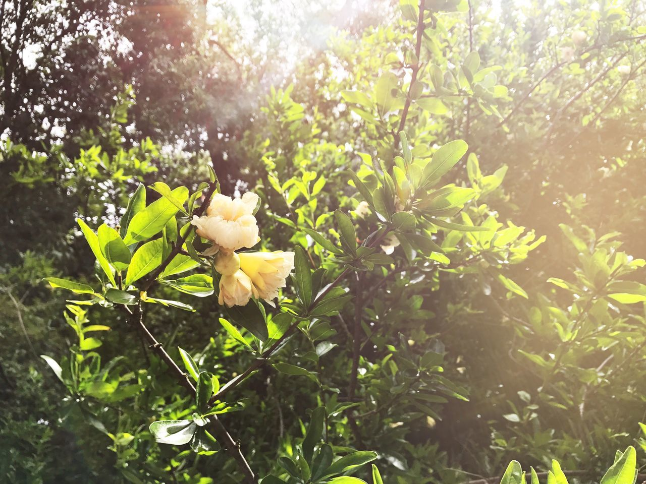 flower, growth, nature, freshness, blossom, plant, petal, beauty in nature, outdoors, no people, fragility, tree, blooming, day, flower head, close-up