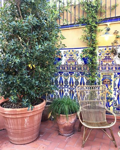 Plant Growth Nature Flower Pot No People Green Color Flower Beauty In Nature Outdoors Day Chair Decoration Blue casa Ramon Casas Barcelona