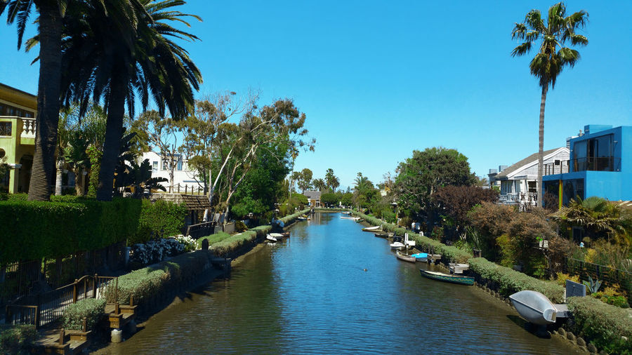 Canal amidst palm trees and buildings against sky