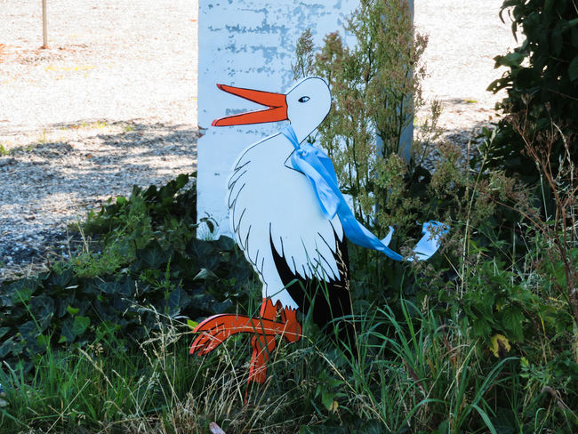 some one believe in the storck Storck Blue Ribbon Art And Craft Close-up Grass