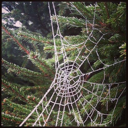 Itsy Bitsy Spider Web