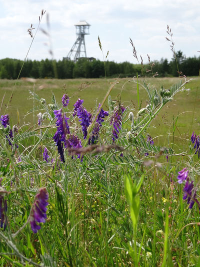 Beauty In Nature Close-up Day Field Flower Mine Nature No People Outdoors Purple