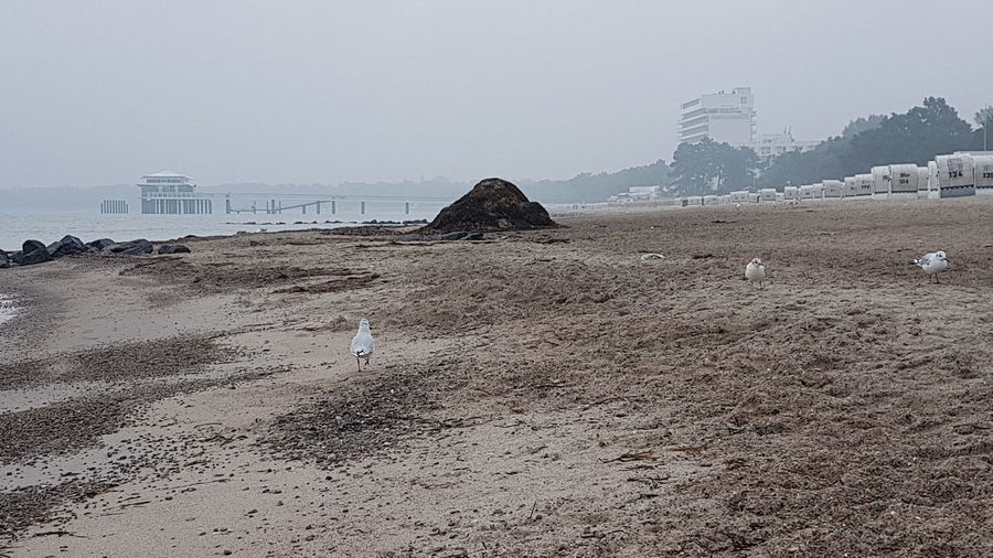 Misty Morning After The Storm Beach Sea Sand Travel Destinations Outdoors Lots Of Seagrass Tourism Landscape Tranquil Scene Beauty In Nature Seagulls Scenics Nature Tranquility Early Morning Vacations Sky Day Horizon Over Water Water No People Low Tide Building Exterior