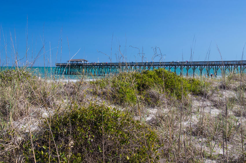 Pier at Myrtle Beach State Park Architecture Beach Beauty In Nature Blue Built Structure Clear Sky Day Grass Growth Land Nature No People Outdoors Plant Scenics - Nature Sea Sky Tranquil Scene Tranquility Water