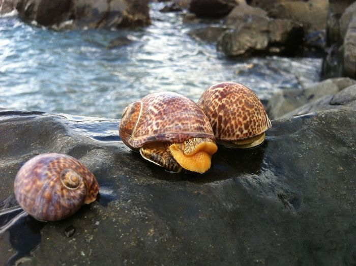 Close-up of snail in sea