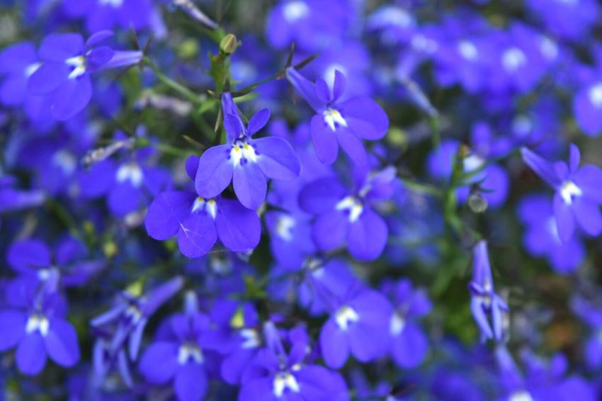 Flower Purple Petal Beauty In Nature Fragility Blue Nature No People Freshness Day Flower Head Blooming Outdoors Plant Growth Close-up Animal Themes