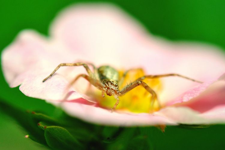 Spider Spiderworld Love Spiders Insect Insect Photography Insects Collection Makro Makro Photography Makro_collection Nature_collection Nature Beauty Close Up Nature Close Up Insect