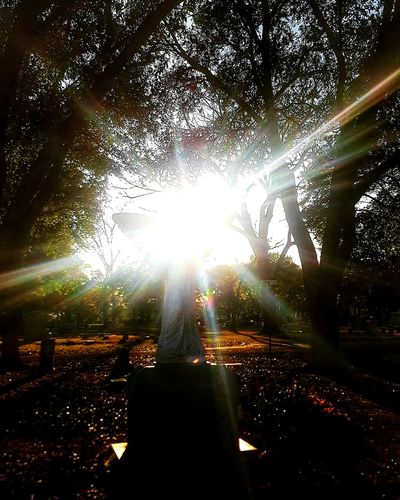 Brilliance Cemetery Cemetery_shots Cemeteryscape Cemetery Photography Cemeterybeauty Sun Sunlight Sunset_collection Sun_collection Sillouette Angel Angels Angel Statue Eye4photography  Eyeem Photography EyeEm Best Shots