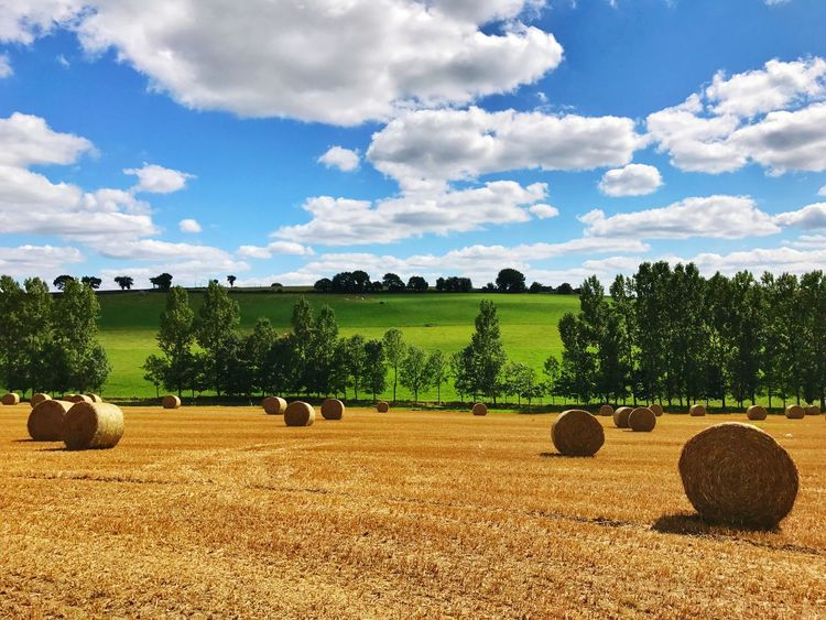 Maël-carhaix Brittany Harvest Hay Bale Nature Landscape Bale  Agriculture Field Rural Scene Hay Bale Tranquil Scene Tranquility Tree Farm Hay Cloud - Sky Harvesting Sky Crop  Beauty In Nature Rolled Up Scenics Nature Day