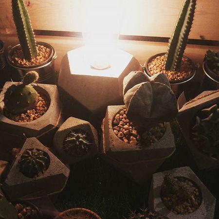 บรรยากาศอุ่นๆ กระถางกระบองเพชร กระถาง กระถางปูนเปลือย แต่งบ้าน แต่งสวน Loft Lamp Livingplants Plants Plant Planter Cactusthailand Cactusshop Cactus Cacti Cactuslover