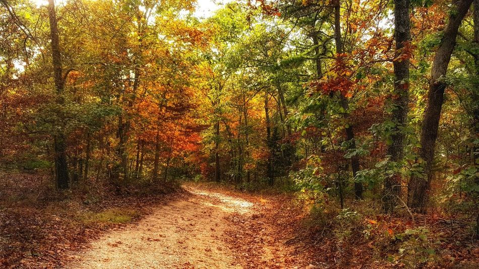 Tree Nature No People Beauty In Nature Outdoors Day Full Frame Fall Colors Hidden Path
