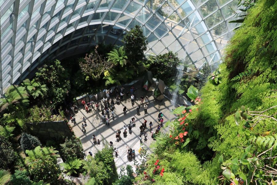 Large Group Of People High Angle View Tree Plant The Photojournalist - 2017 EyeEm Awards The Great Outdoors 2017 Eyeem Awards Growth Real People Modern Building Exterior Nature EyeEmNewHere Break The Mold 3XSPUnity Gardens By The Bay Crowd Plant Nursery People Indoors  The Purist (no Edit, No Filter) Singapore Travel Cloud Forest Dome Travel Destinations Miniature Secret Spaces :) Neighborhood Map