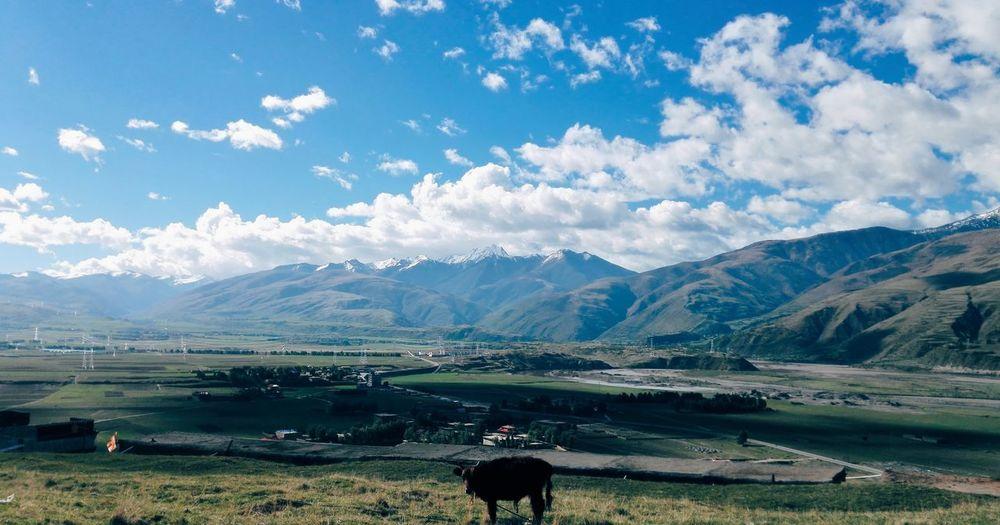 俯瞰高原小村庄 Mountain Range Mountain Landscape Cloud - Sky Nature Sky Grass Scenics Outdoors Beauty In Nature Day No People Yak Tibet